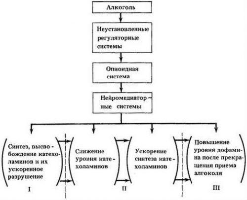 Схема влияния алкоголя на опиоидную систему
